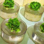 Натуральный салат со своего огорода лучше магазинного