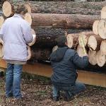 Как определить кубические метры  круглой древесины