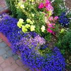 Посадка цветочных растений