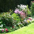 Группы цветочных растений
