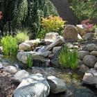 Композиции из растений и камней