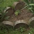 Облаживаем клумбы - деревянными кругляшами