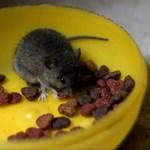 Как избавится от мышей в утеплителе и доме, пари строительстве и эксплуатации?