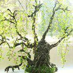 Засаливаем пни срезанных деревьев