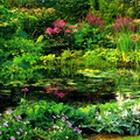 Посадка растений для водоемов
