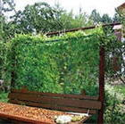 Сетка, вместо подвязок, для вьющихся растений