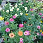 Размножение цветочных растений